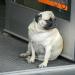 Thumbnail for Pet Obesity Awareness